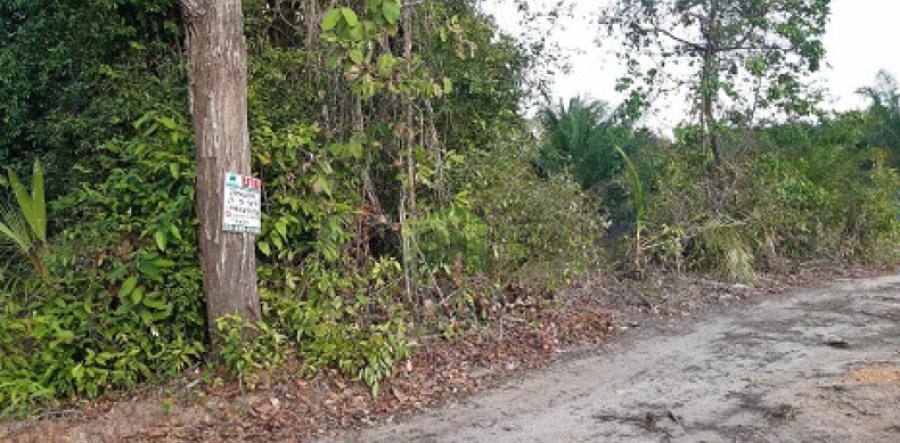 ขายด่วน ที่ดินเปล่า ซอย หน้าถ้ำ โคกเคียน เมืองนราธิวาส เนื้อที่ 280 ตร.ว พร้อมเข้าทำประโยชน์