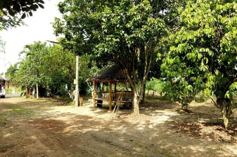 ขายด่วน ที่ดินสวนเกษตร มีผลผลิตพร้อมเก็บเกี่ยว ชลบุรี แถม บ้านเดี่ยว 1 ชั้น 2หลังบ้าน  คลองหลวง3 เนื้อที่ 2 ไร่ 67 ตร.ว.  เส้นพนัสนิคม วัดสุวรรณ บ่อทอง พร้อมอยู่อาศัย หลังเกษียณ